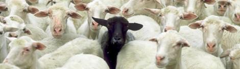 cropped-black-sheep-2